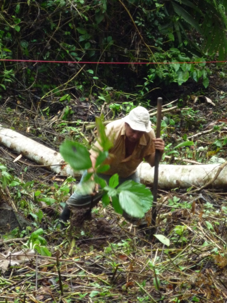 Albertino pflanzt einen Maquenque Palme