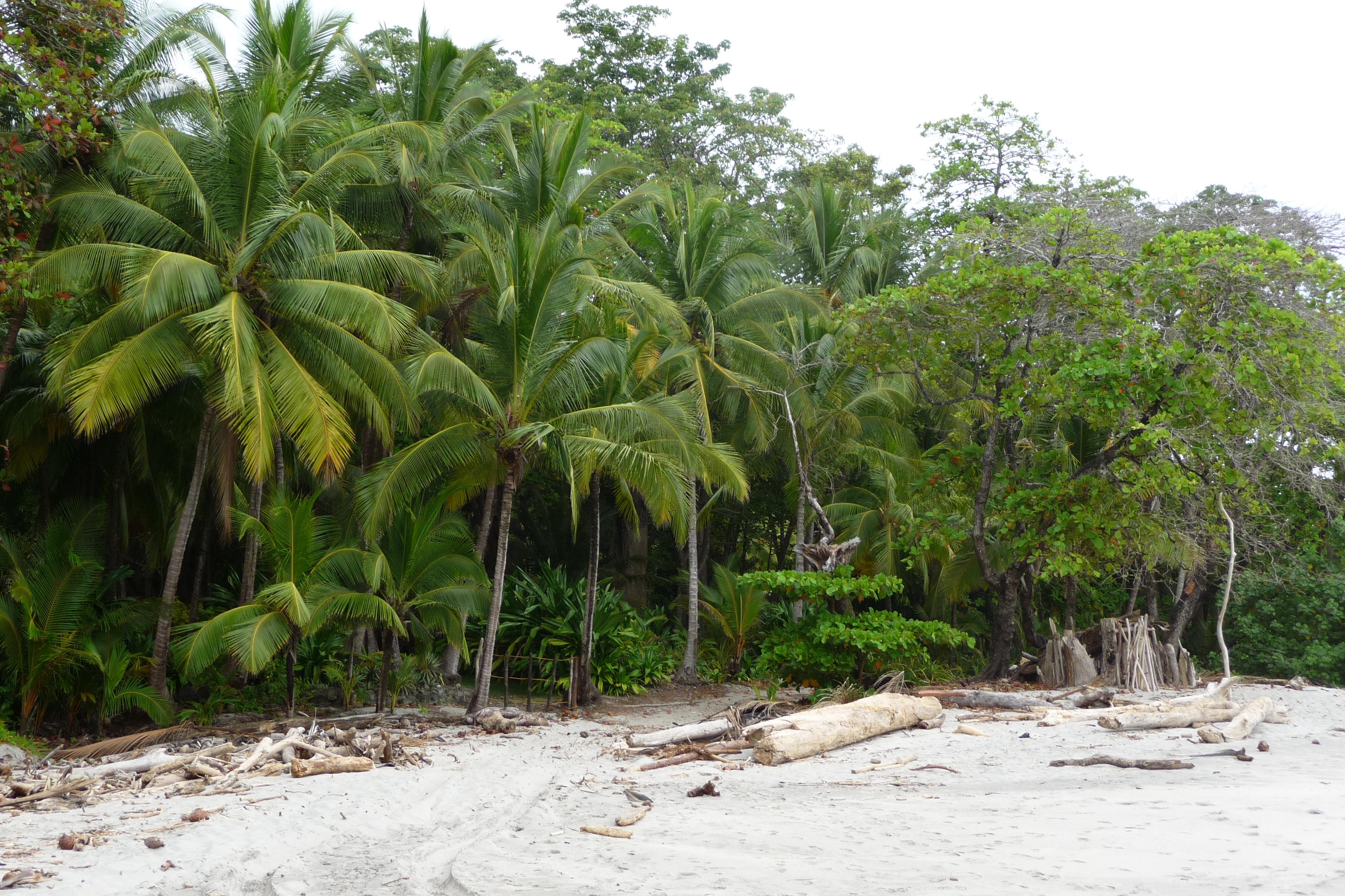 Der Regenwald – Wissenswertes