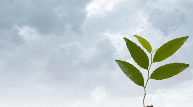 Baum verschenken Spruch - Hintergrund