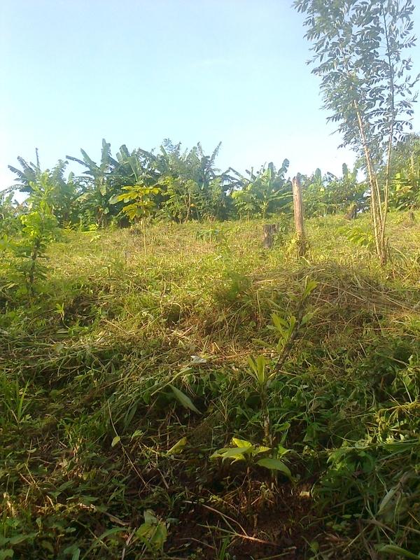 Wiederbewaldung
