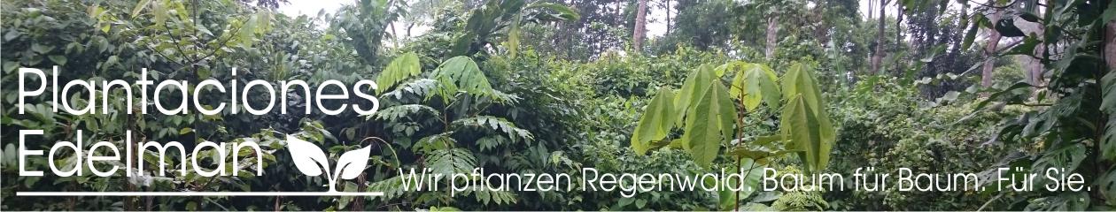Regenwald aufforsten Logo