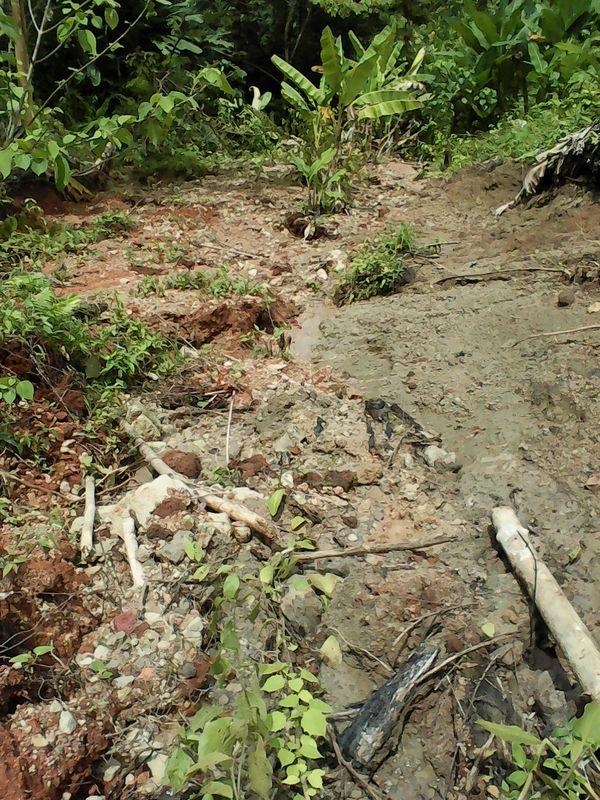 Erdrutsch Regenwald