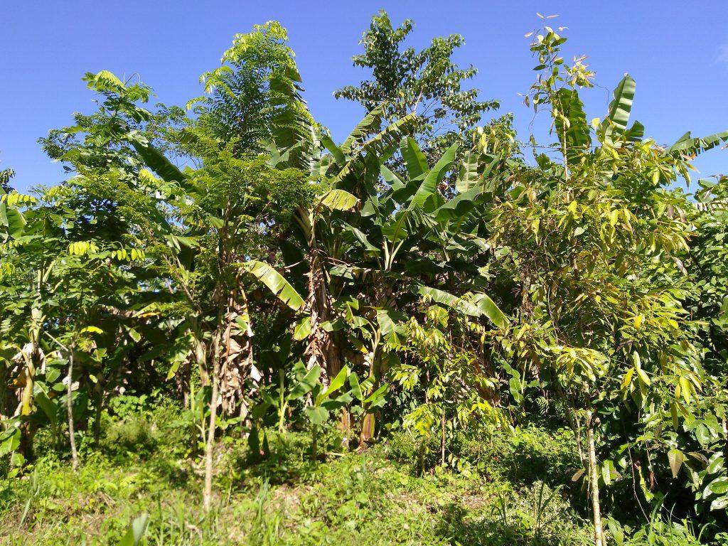 Bäume im Regenwald