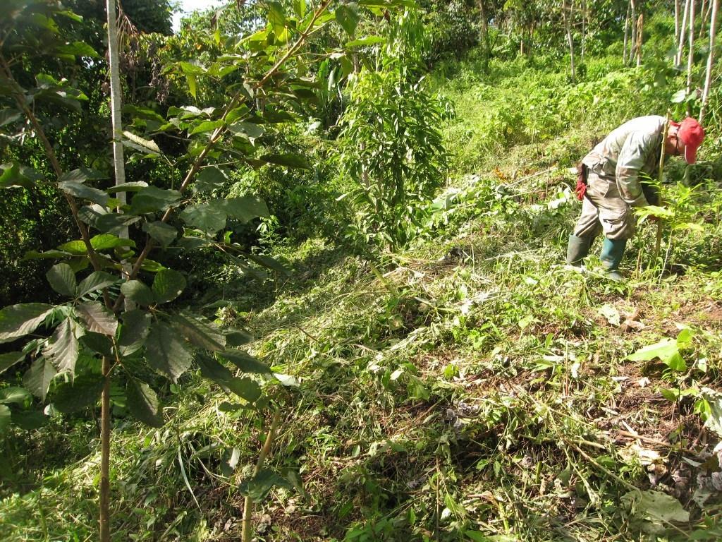 Regenwald aufforsten