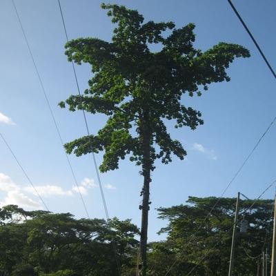 Favicon Baum verschenken