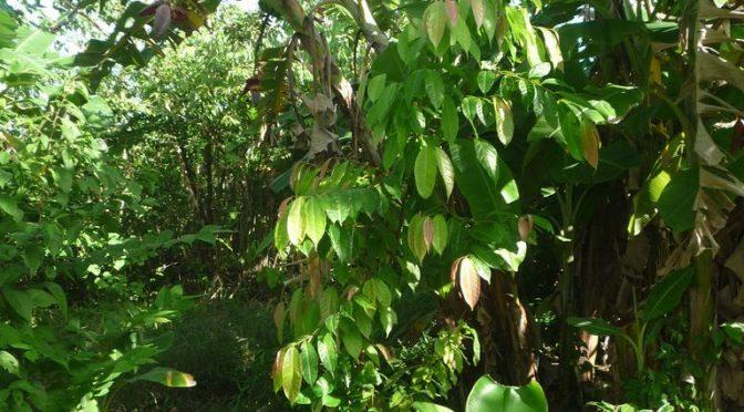 Statistik – diese bäume haben wir für Sie im Regenwald gepflanzt