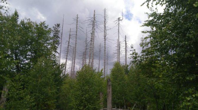 Warum werden Junge Bäume im Wald Umzäunt?