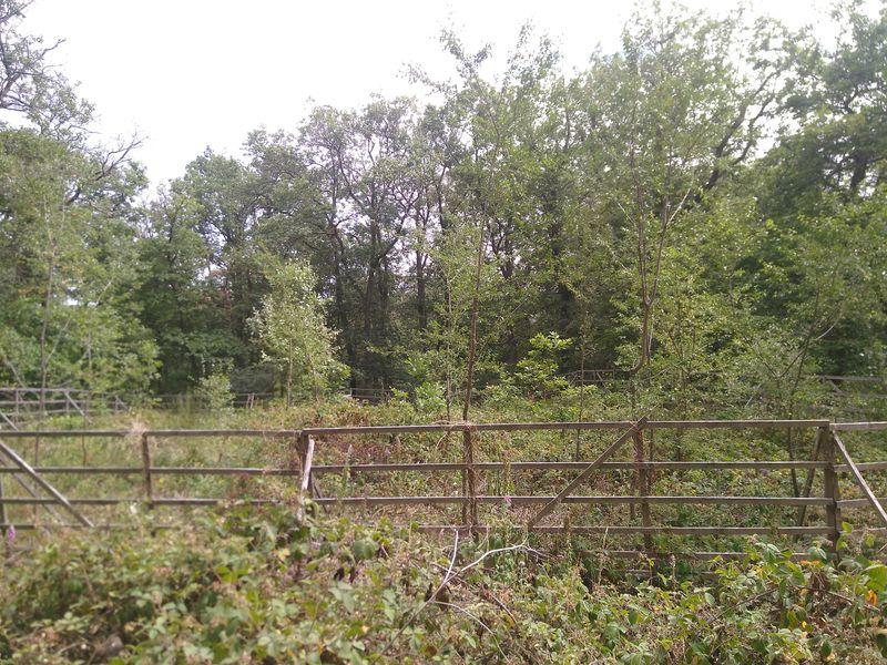 Schonung mit Zaun im Wald