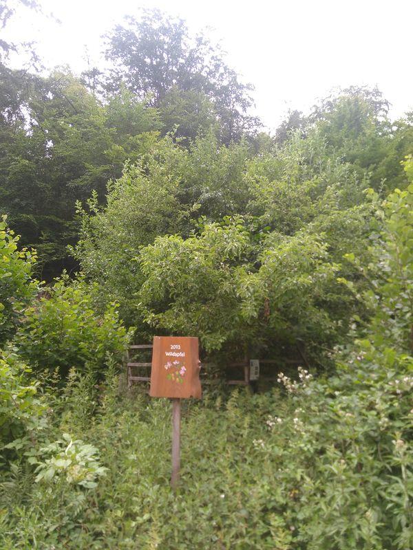 Wildapfel Aufforstung - 2013 gepflanzt und eingegattert