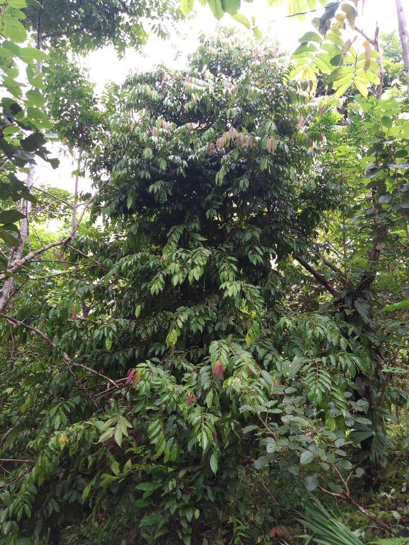 Titor Baum