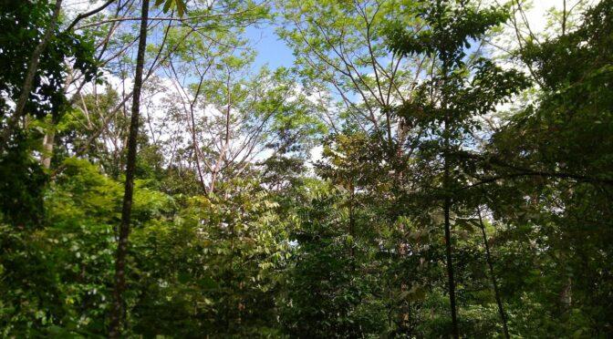 So haben sich unsere Bäume entwickelt
