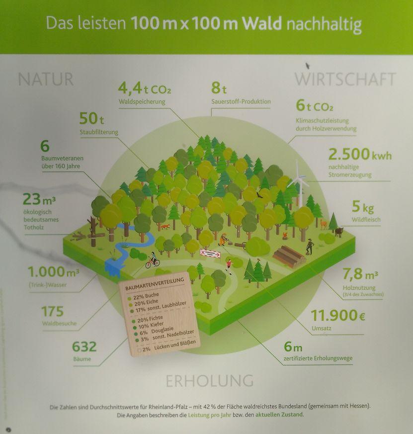 Durchschnittswerte Waldleistung Rheinland-Pfalz