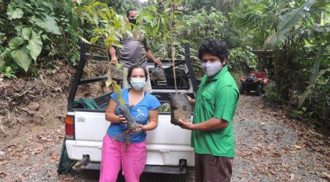 Seltene Regenwaldbäume gespendet