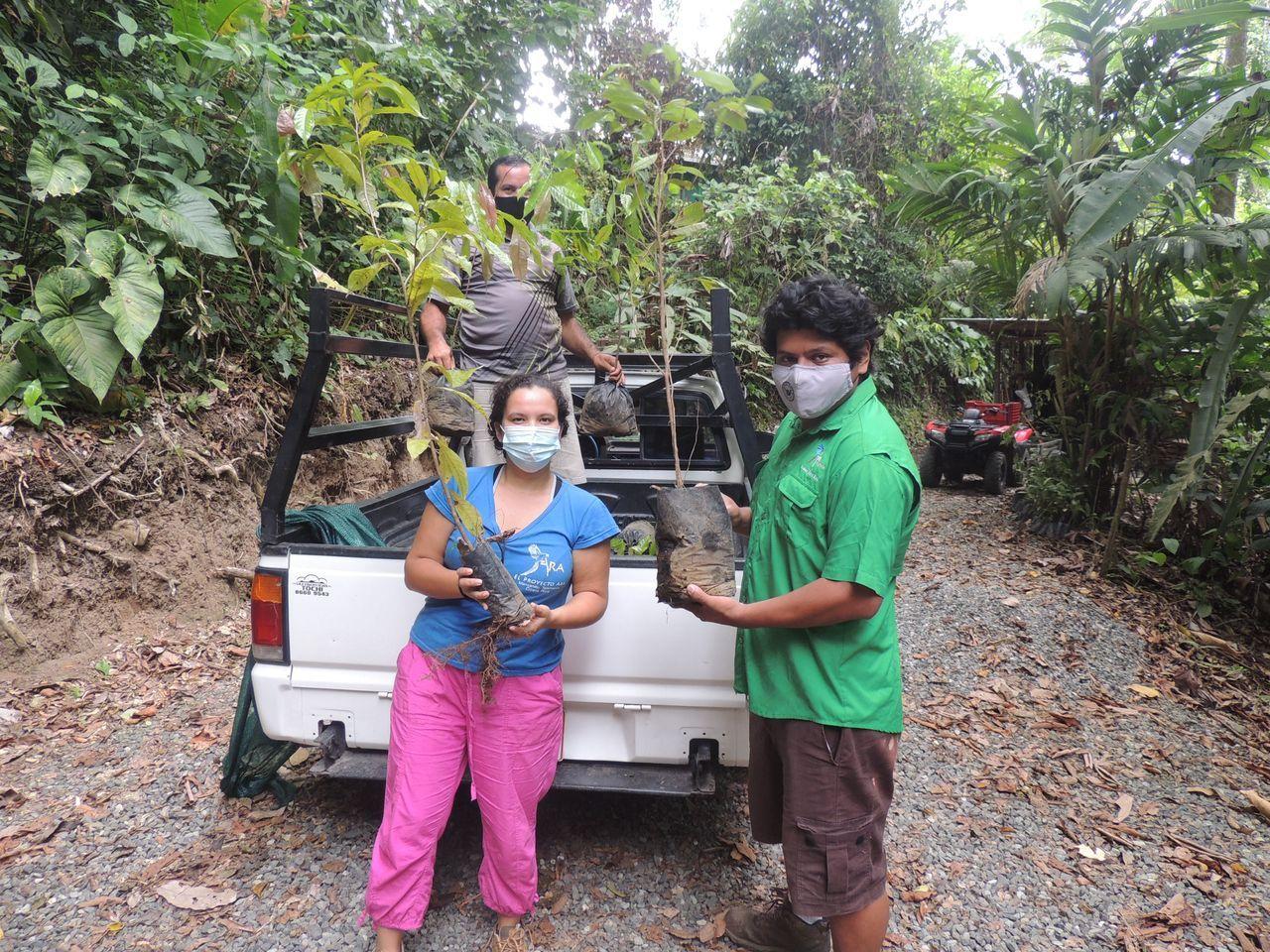 Spende Regenwaldbaum